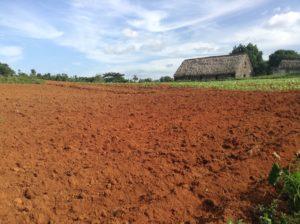 Fields in Vinales